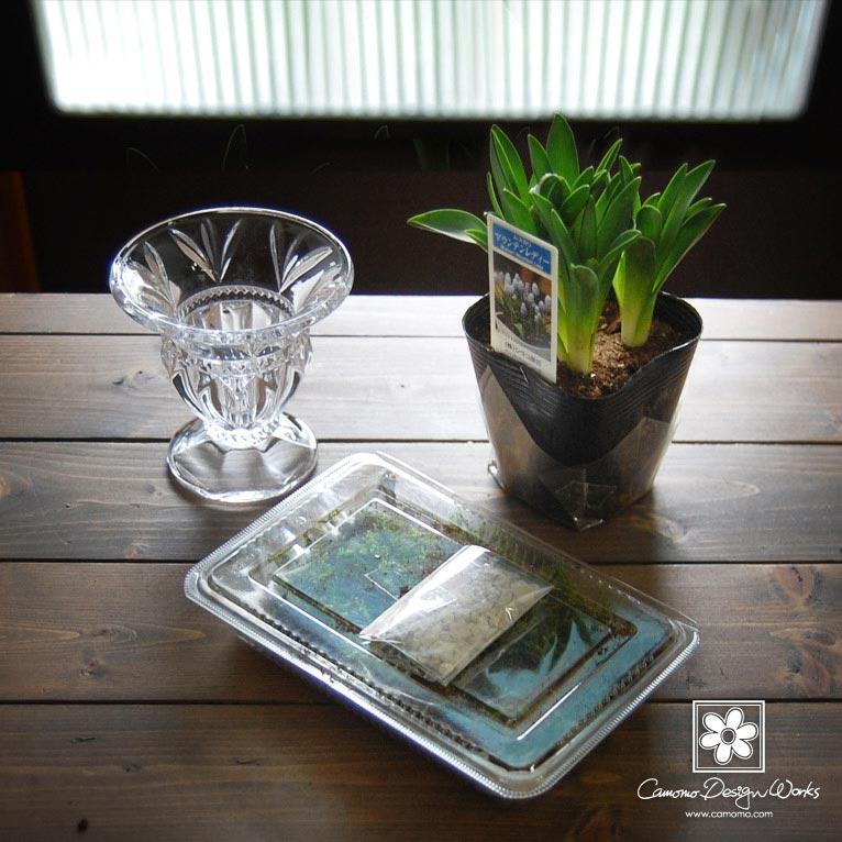 Camomo Design Works ムスカリの水栽培
